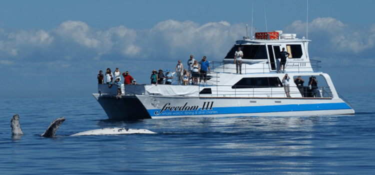 Whale watching activities in Hervey Bay